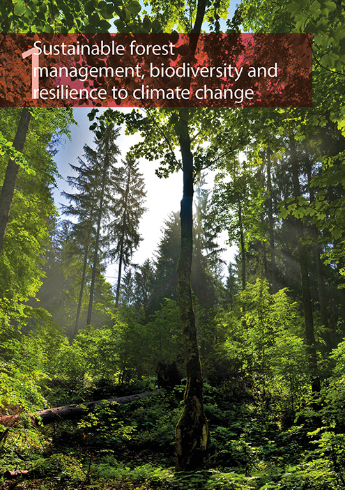 Sustainable forest management, biodiversity and resilience to climate change